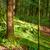 híd · napos · zöld · erdő · fák · tavasz - stock fotó © vapi