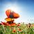 klaprozen · veld · stralen · zon · hemel · bloem - stockfoto © vapi