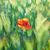 red poppy on the green field stock photo © vapi
