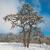 tél · jeges · erdő · fa · nap · természet - stock fotó © vapi