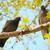 сидят · филиала · группа · внутренний · Blue · Sky · дерево - Сток-фото © vapi