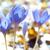 krokus · veld · paars · bloemen · bos · boom - stockfoto © vapi