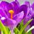 первый · весны · огурцы · крест · фон · завода - Сток-фото © vapi