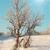 tél · jeges · erdő · fa · nap · tájkép - stock fotó © vapi