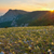 mountains and the field of yellow flowers sunset stock photo © vapi