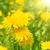 zonnestralen · veld · wolken · najaar · hemel · boom - stockfoto © vapi