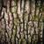 brązowy · dąb · kory · puszka · drzewo · charakter - zdjęcia stock © vapi