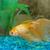 tropical golden fish stock photo © vapi