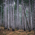 mglisty · lasu · świetle · cień · duży · drzew - zdjęcia stock © vapi