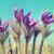 весенние · цветы · весны · саду · красоту · зеленый · цвета - Сток-фото © vapi