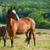 cavalos · verde · amarelo · primavera · prado · Valência - foto stock © vapi