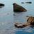 forró · naplemente · víztükör · tájkép · tenger · óceán - stock fotó © vapi