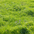 green grass stock photo © vapi