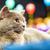 cute · naranja · gatito · sesión · azul · amarillo - foto stock © vapi