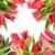 tulipany · kolaż · wiosennych · kwiatów · charakter · lata · zielone - zdjęcia stock © vavlt