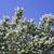 bush of a jasmine stock photo © vavlt
