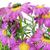 çiçekler · bulutlu · gökyüzü · çiçek · bahar · papatya - stok fotoğraf © vavlt