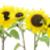 napraforgók · kollázs · néhány · színes · napraforgó · képek - stock fotó © vavlt
