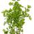 sauge · Bush · vertical · isolé · blanche · jardin - photo stock © vavlt