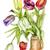 örnek · kırmızı · lale · çiçekler · bahar · doğa - stok fotoğraf © vavlt