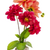 bouquet · fleurs · céramique · pot · rose · Berry - photo stock © vavlt