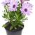 violet · vers · paars · Brussel · voedsel · groene - stockfoto © vavlt