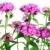 розовый · выстрел · цветок · зеленый · завода - Сток-фото © vavlt