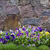 granite wall and pansies stock photo © vavlt