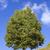 chêne · vert · prairie · ciel · lumière · nuages - photo stock © vavlt