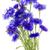 blue floral stock photo © vavlt