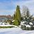 winter frozen park stock photo © vavlt