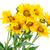 dahlia · zonnebloemen · geïsoleerd · witte · bloemen · oranje - stockfoto © vavlt