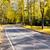 autumn road stock photo © vavlt