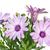 virágcsokor · virágok · barátnő · férfi · farmernadrág · fehér - stock fotó © vavlt