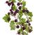 bos · bush · rijp · bessen · weinig - stockfoto © vavlt