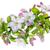 izolált · almafa · fehér · természet · alma · levél - stock fotó © vavlt