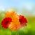 赤 · 花 · 画像 · 春 · 自然 · デザイン - ストックフォト © vectomart