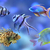 Coral reef fish stock photo © Vectorex