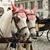 hermosa · caballos · Pareja · calle · Viena · caballo - foto stock © velkol