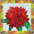 Vector illustration of flower chrysanthemum. stock photo © Vertyr
