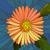 çiçek · turuncu · vektör · mozaik · büyük · karanlık - stok fotoğraf © Vertyr
