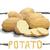 vektor · egyszerű · illusztráció · krumpli · rajz · stílus - stock fotó © Vertyr