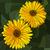 bloem · Geel · vector · mozaiek · groot · pot - stockfoto © Vertyr