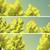 ingesteld · loof · bomen · geïsoleerd · illustratie · vector - stockfoto © vertyr