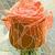 Vector illustration of flower red rose. stock photo © Vertyr