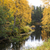forest trees and river at cloudy day stock photo © vetdoctor