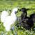 tyúk · kép · arany · tojások · húsvét · tojás - stock fotó © vetdoctor