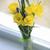 flores · vaso · branco · janela · natureza · verde - foto stock © vetdoctor