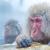 hó · majom · japán · termálfürdő · park · tavasz - stock fotó © vichie81