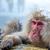 снега · обезьяны · Японский · термальная · ванна · парка · человека - Сток-фото © vichie81